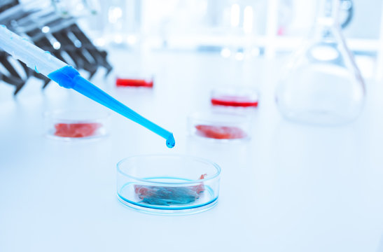 Meat cultured in laboratory conditions.lab