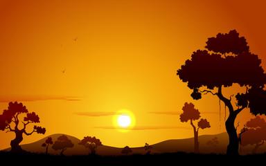 Sunset view of Jungle