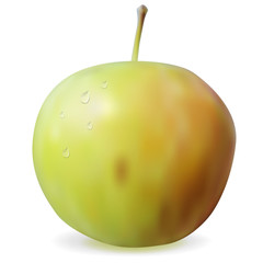 Green ripe apple