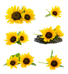 Decorative sunflowers with seeds.