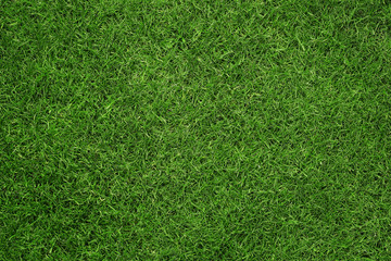 Foto auf AluDibond Gras Close up of green grass texture, background with copy space