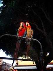 Two large parrots