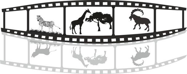 Film of life