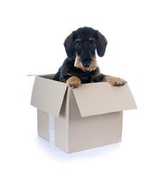 Hund im Karton