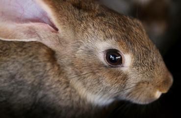 Young rabbit animal farm and breeding.
