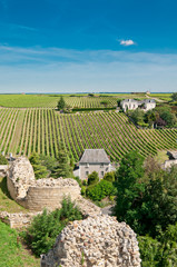Vineyard in the famous wine making region -Loire Valley , France