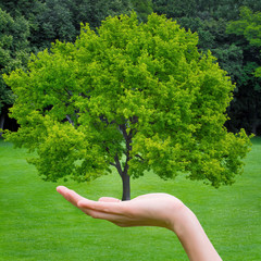 Beautiful green tree in a hand