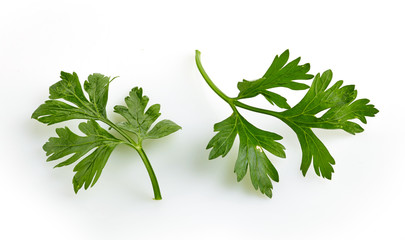 Green parsley leaves on a white background