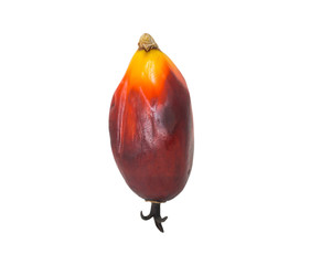 Palm oil seed over white background