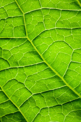 Macro photo background with green leaf surface