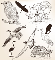 Collection of hand drawn vector detailed animals for design