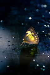 butterfly on mirror