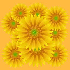 sunflower, pattern, vector illustration