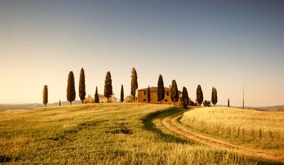 In de dag Olijf Campo di Grano e Cipressi, Toscana