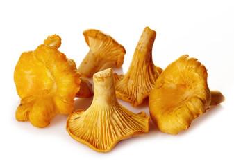 Fototapeta Fresh chanterelle mushrooms obraz
