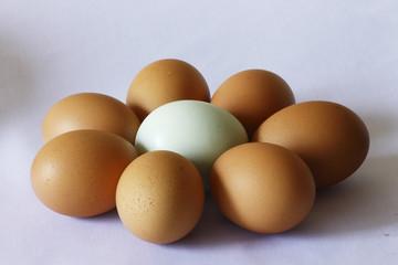 eggs live together