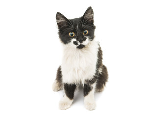 black and white kitten isolated