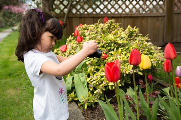 Young photographer taking a picture of tulips