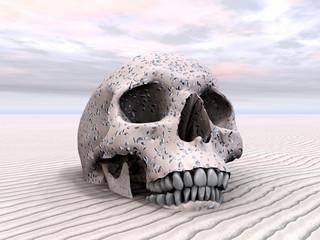 Menschlicher Schädel im Wüstensand