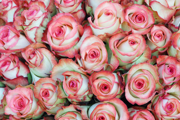 Close-up of bright bunch of freshly cut beautiful pink roses.