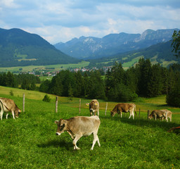 Fototapete - Farmland