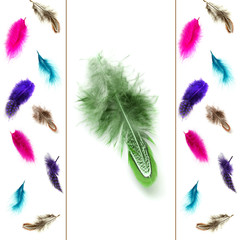 Collage of colorful decorative feathers, isolated on white