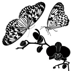 tropical butterflies and orchids isolated