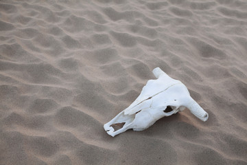 Animal skull lying on the sand in the middle of the desert