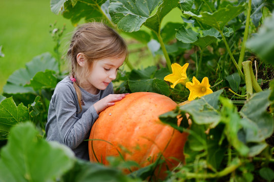 Cute little girl hugging a pumpkin