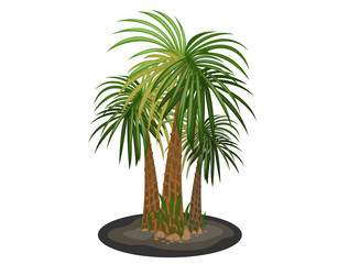 Palm trees cartoon vector on a white background