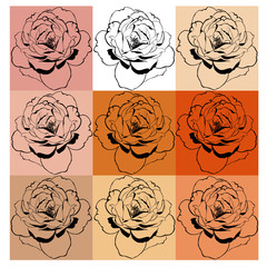 collage of multi-colored roses on the backgrounds