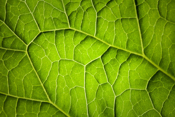 Nature macro photo background with green leaf