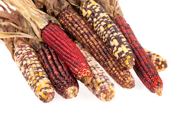 Indian corn isolated on white background