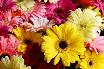 Bouquet  gerbera flower