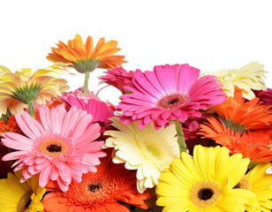 Bouquet  gerbera flower