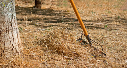 rake and grass