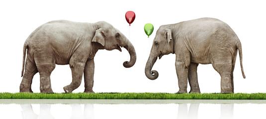 couple of the elephants