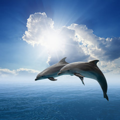 Photo sur Aluminium Dauphins Dolphins jumping