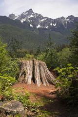 Overlook at Cut Tree Stump North Cascade Mountains Washington