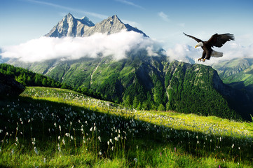 Wall Mural - eagle in the Alps