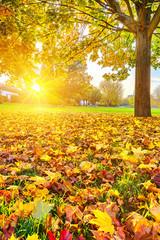 Wall Mural - Sunny autumn foliage
