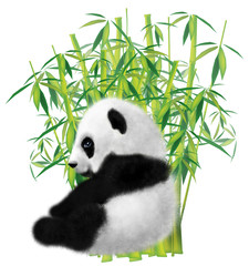 Panda and bamboo on white background