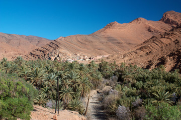 Palm tree oasis in Ait Mansour valley