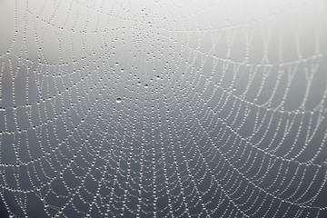 cobweb with morning dew