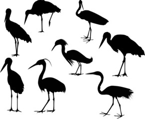 eight storks and herons isolated on white