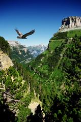 Wall Mural - vulture flying in Ordessa valley