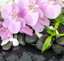 Wellness Concept: orchids, bamboo, stone, water