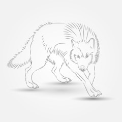 Silhouette of Wolf in Vector illustration