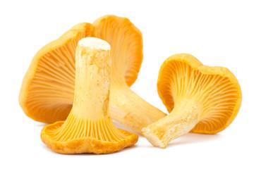 Fototapeta Yellow chanterelle isolated on white background obraz