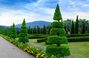 pine trees garden